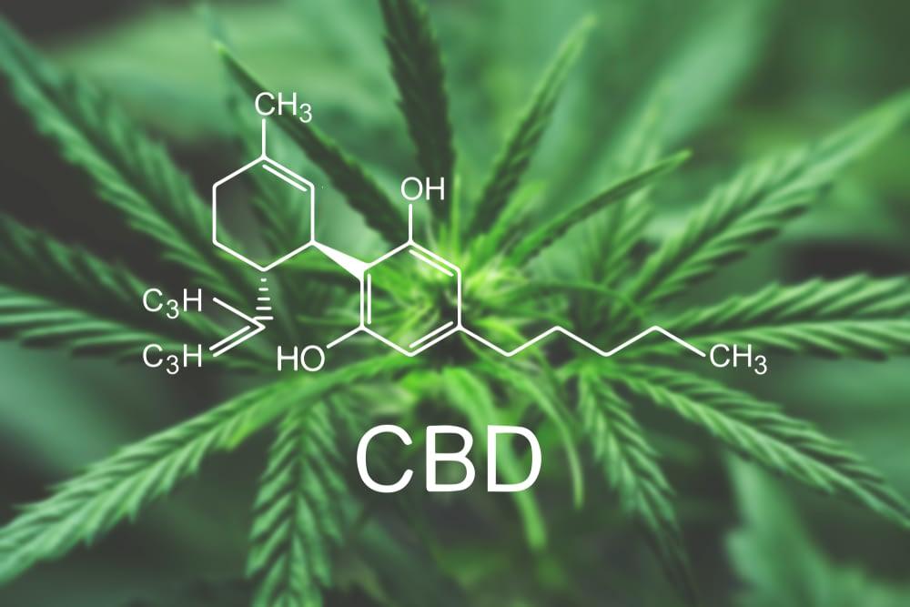 high CBD hemp strains
