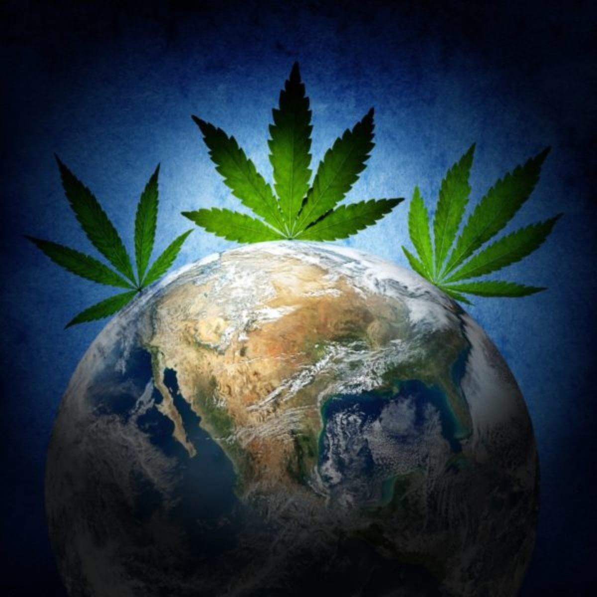 CBD hemp plants impact our ecosystem