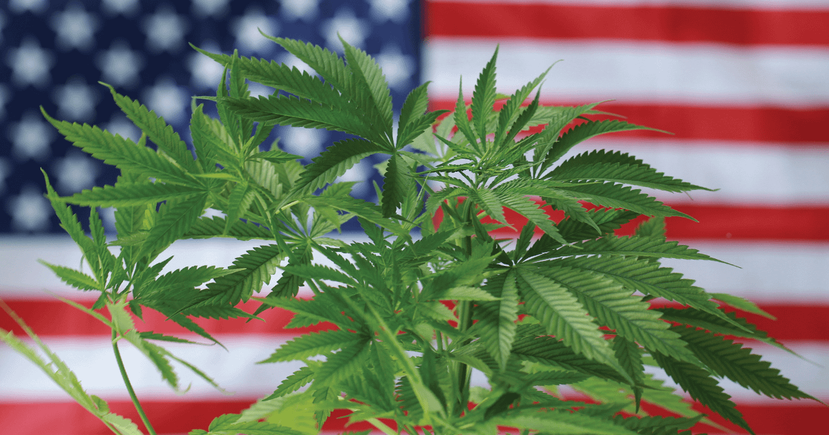 is hemp legal in your state