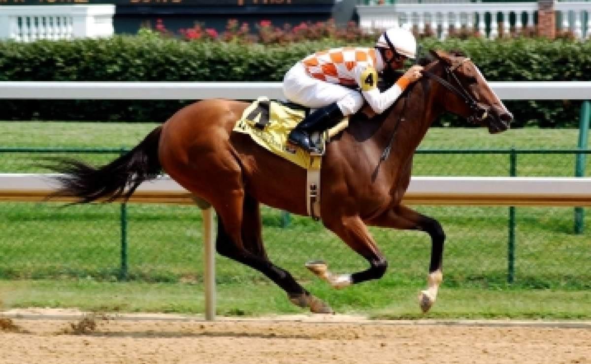 CBD flower enters equine arena