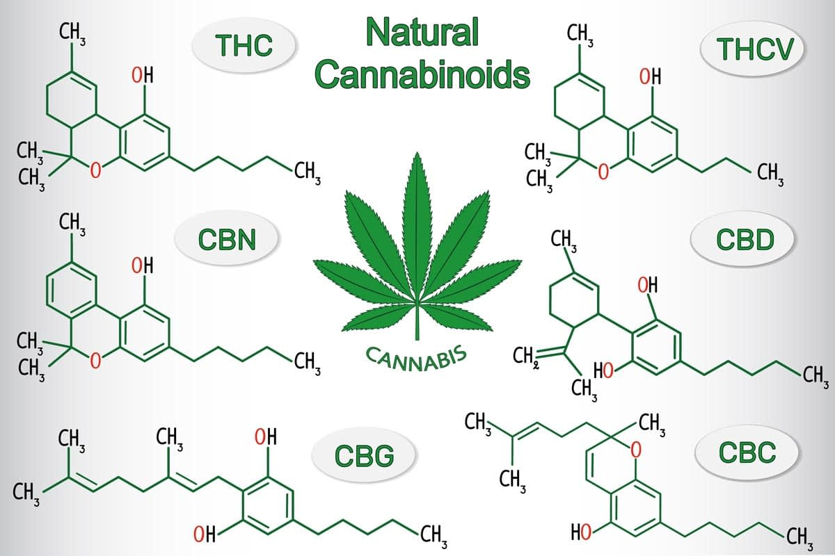 CBD vs. CBG hemp cannabinoids