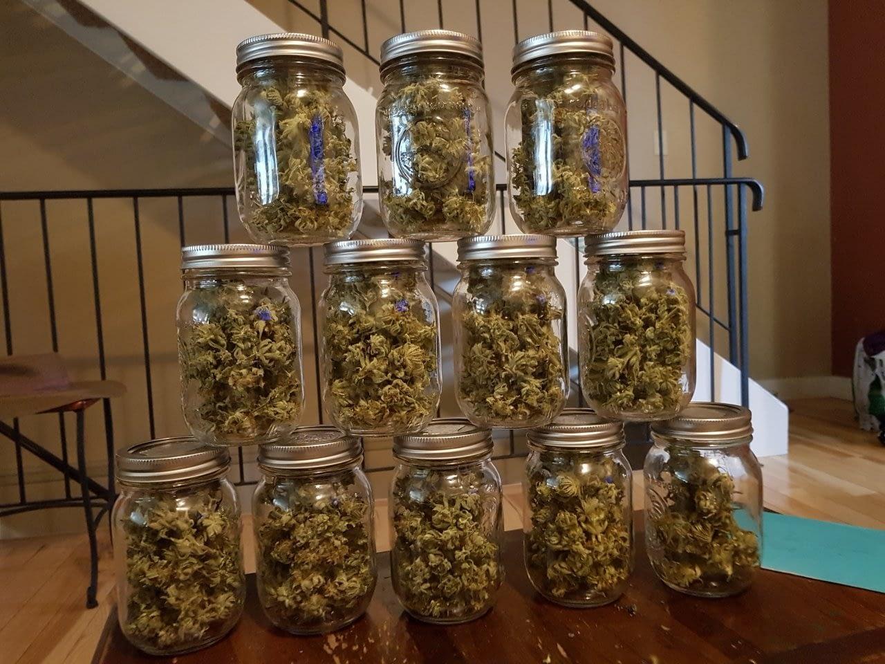 CBD flower storage