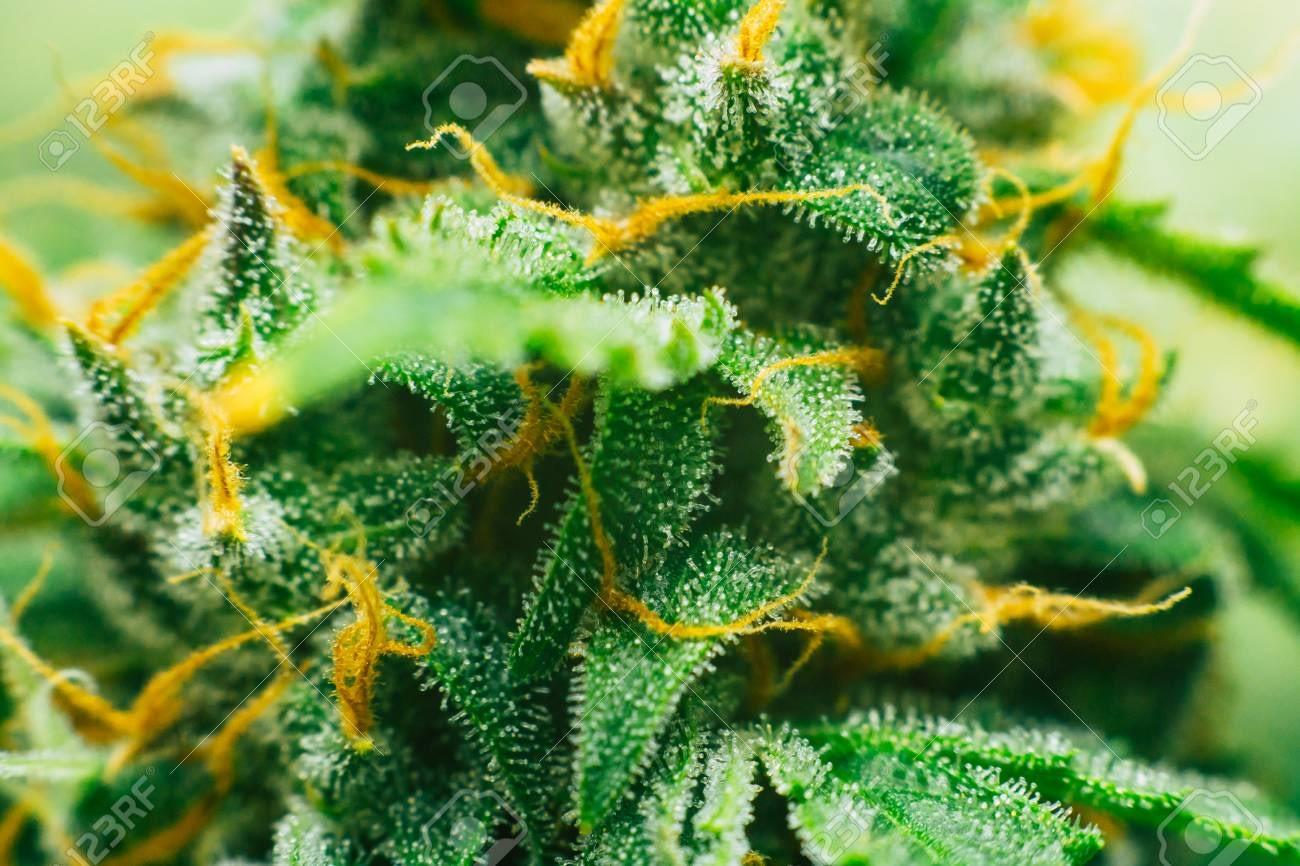 hemp flower for you