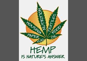hemp growning