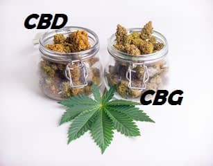 CBD or CBG in Hemp Flower