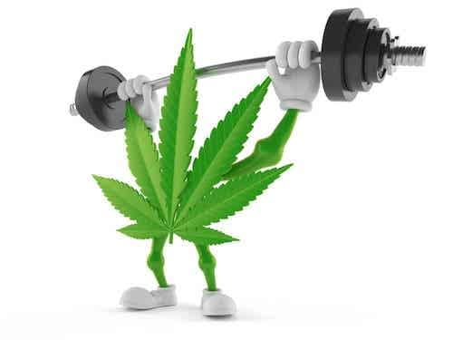 CBD Hemp Flower Prepares you for workouts