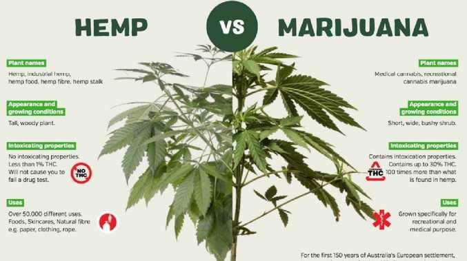 from marijuana to hemp flower