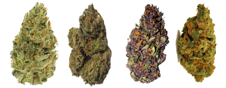 Know your hemp flower strains Comparisons