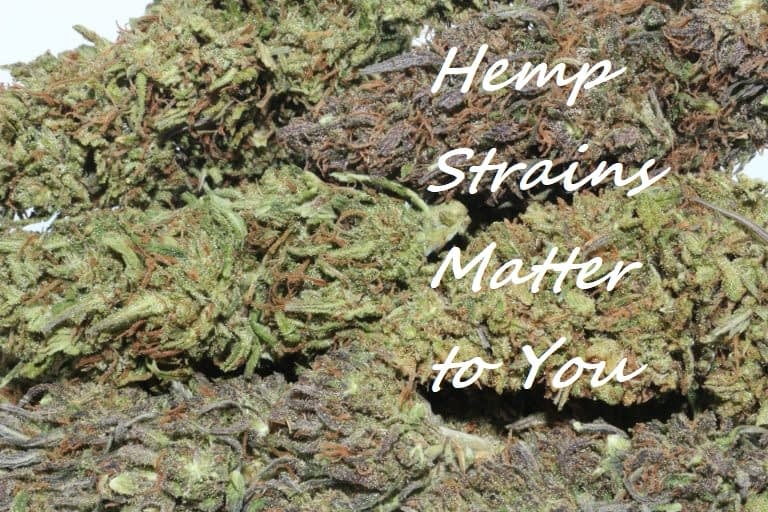 It's all about hemp strains