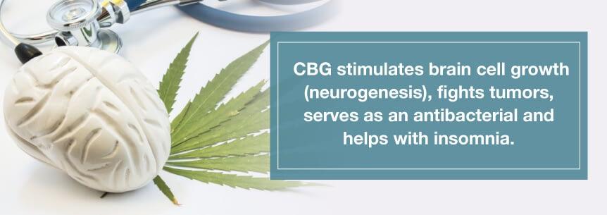 Hemp CBG and the endocannabinoid system