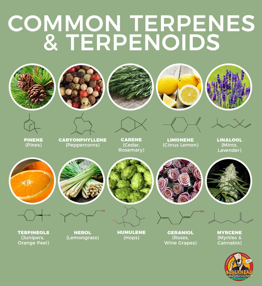 The most important terpenes