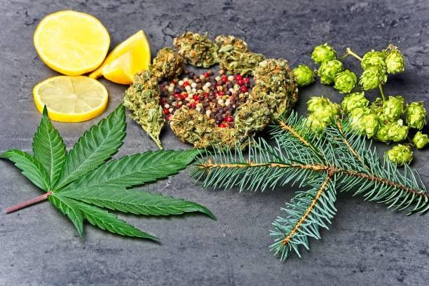 hemp flower terpenes linalool & limonene
