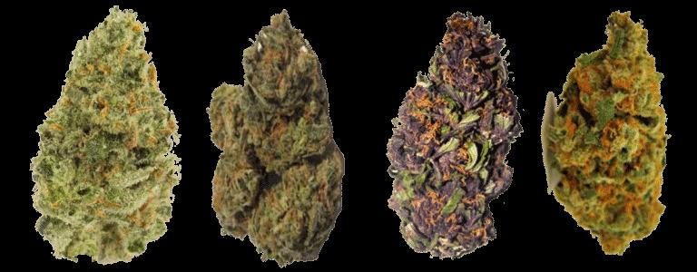 CBD Hemp Flower Strain Comparisons
